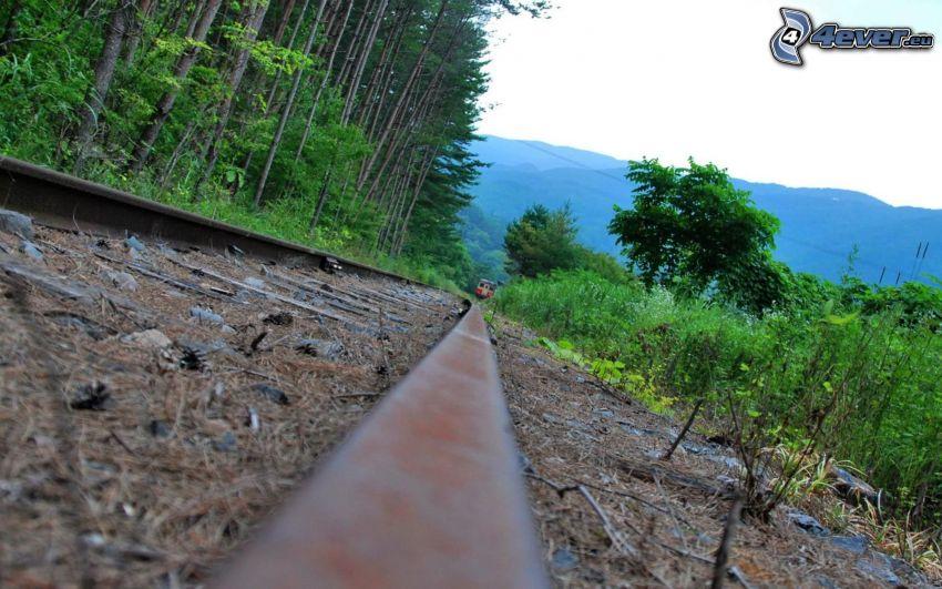 staré koľajnice, les, vlak