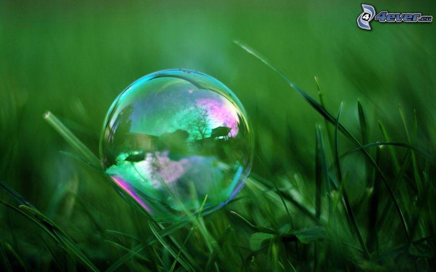 bublina, tráva
