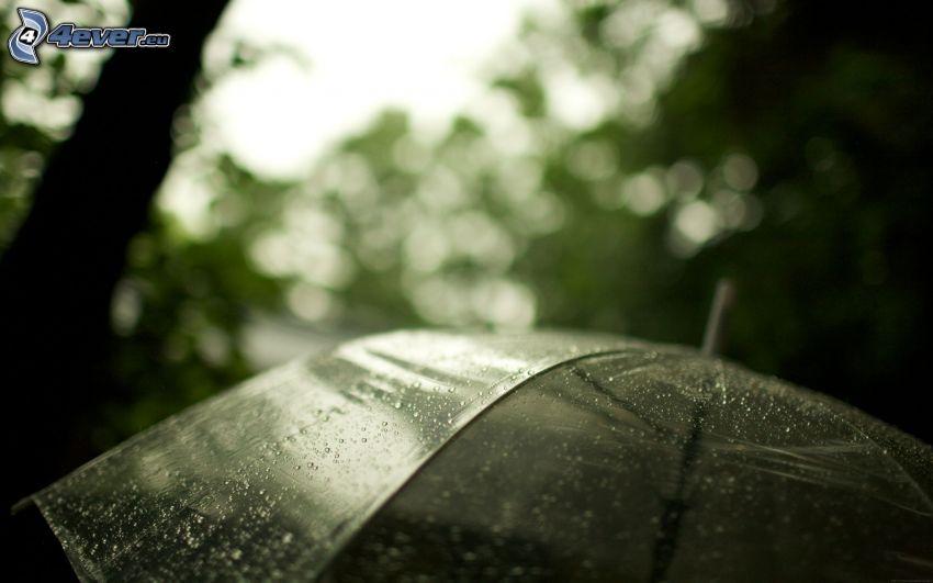 dáždnik, kvapky vody
