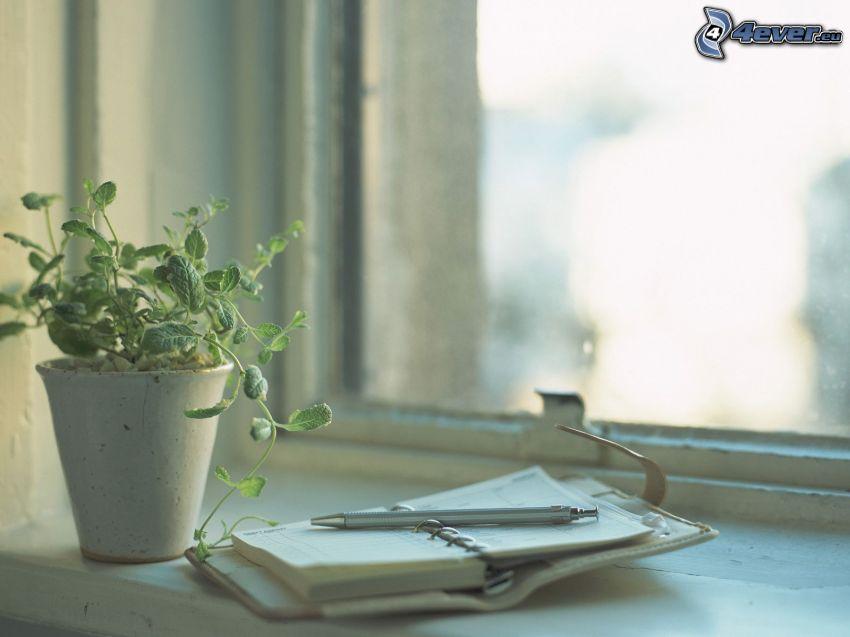 kniha, kvetináč, okno
