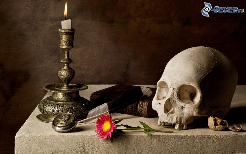 lebka, kniha, kvet, svietnik, sviečka
