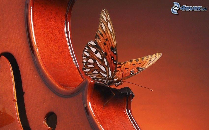 motýľ, husle