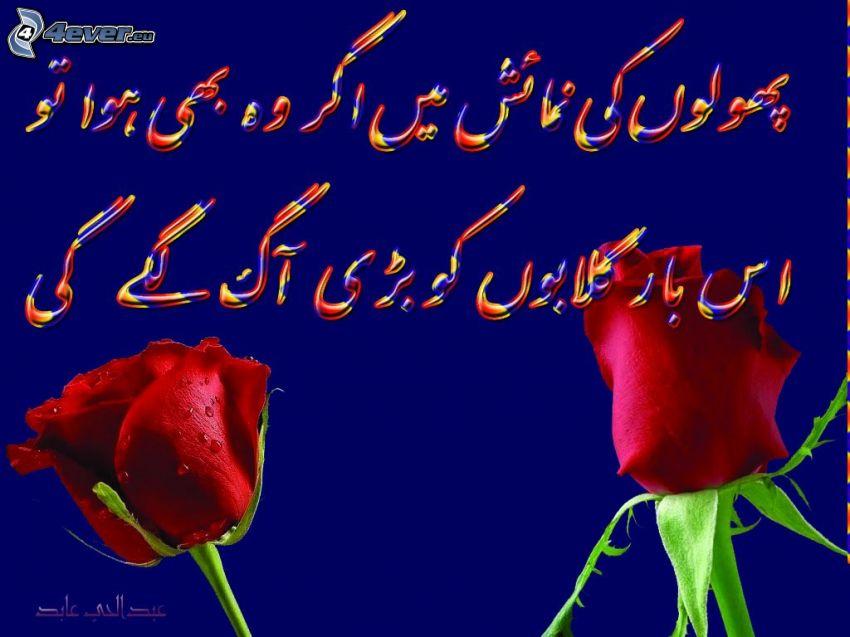písmo, červené ruže