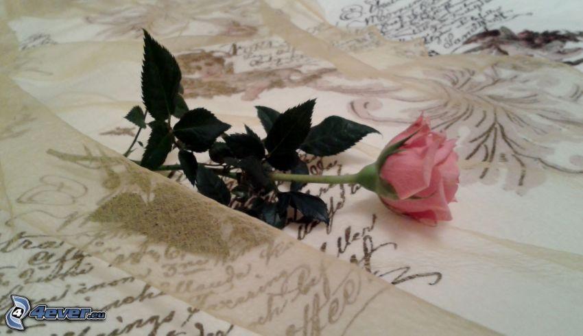 ružová ruža, písmo