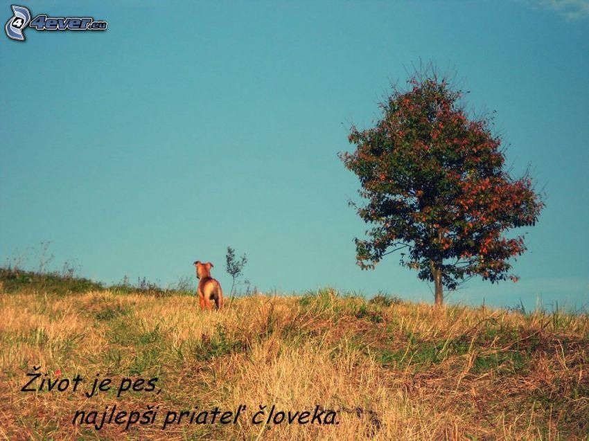 život je pes, citát, pes, osamelý strom, lúka