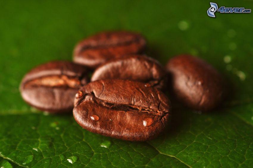 kávové zrná, kvapky vody