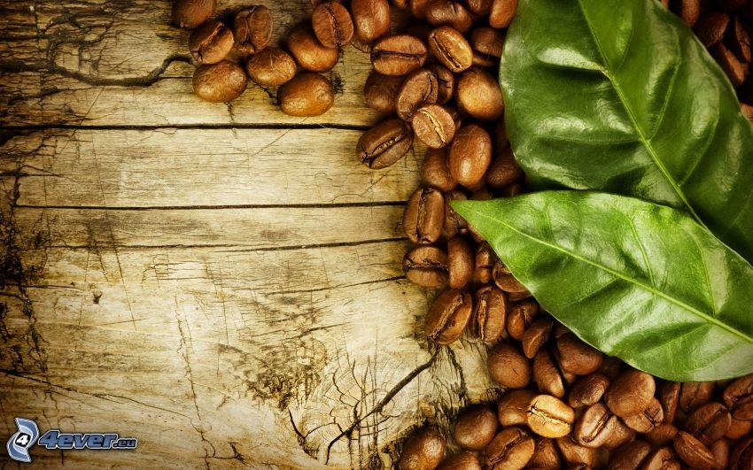 kávové zrná, listy
