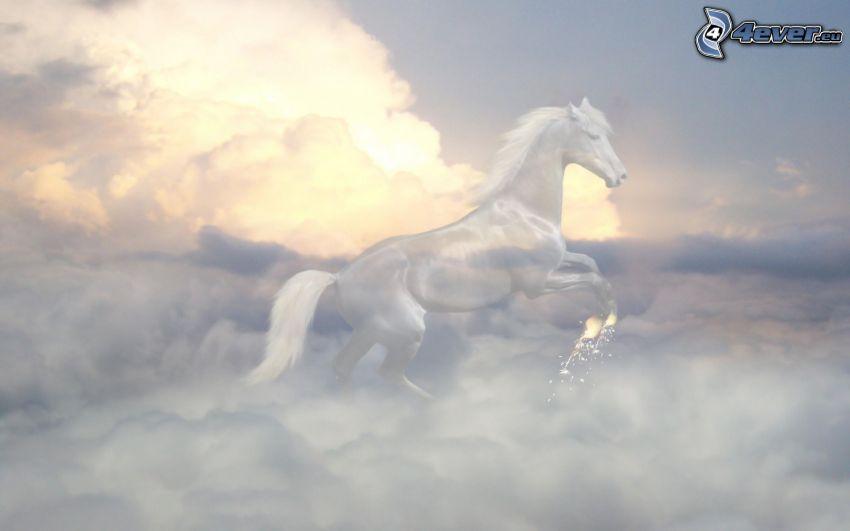 biely kôň, oblaky