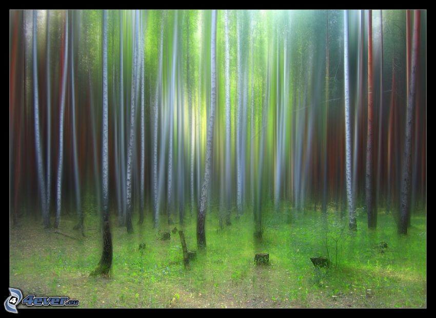 brezový les, kreslené stromy