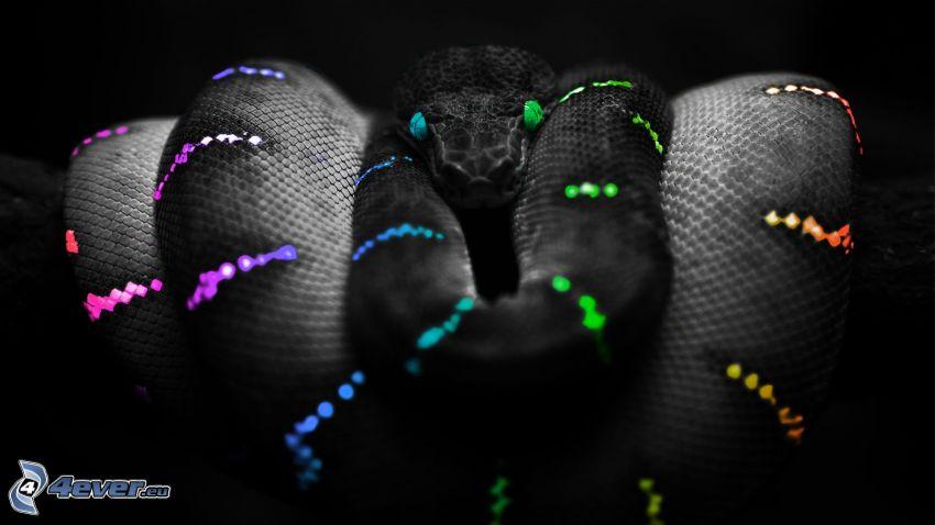 farebný had