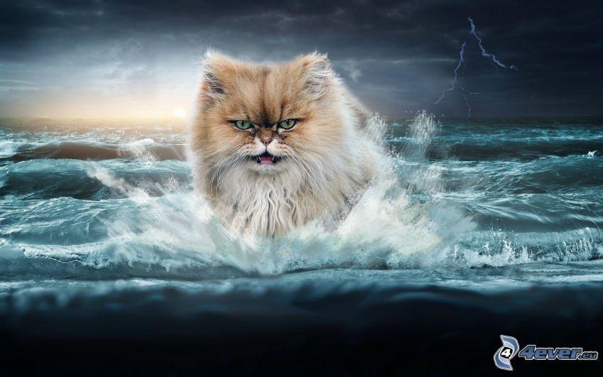 mačka, more