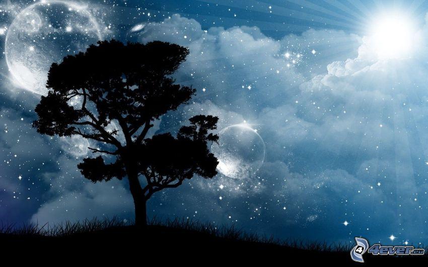 slnko, silueta stromu, nočná obloha