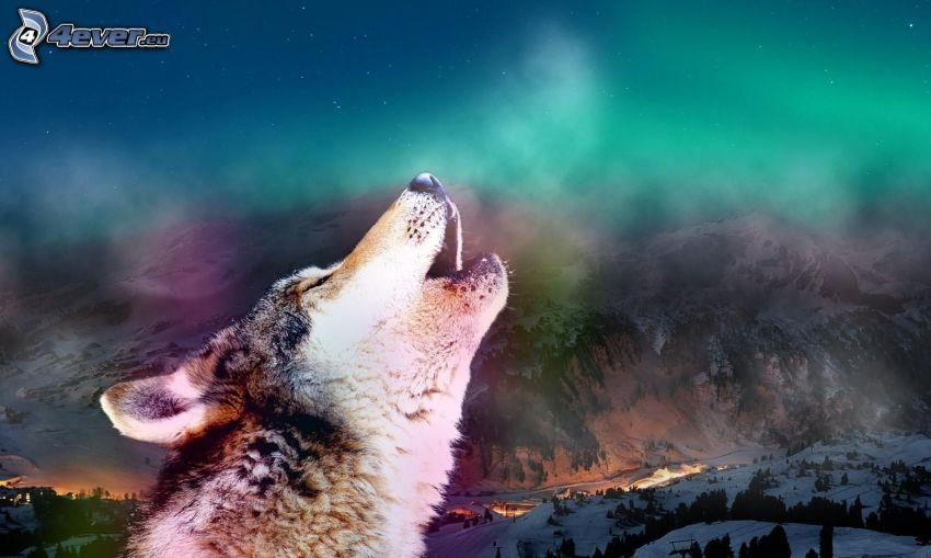 vlk zavýja, zasnežená krajina