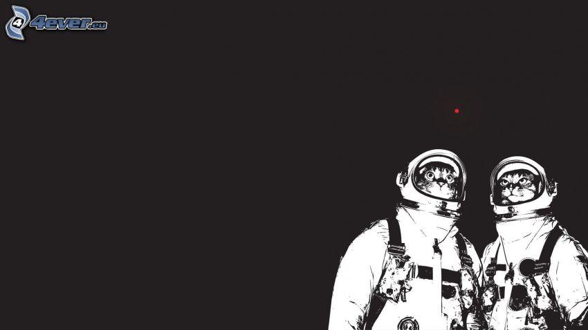 kozmonauti, mačky