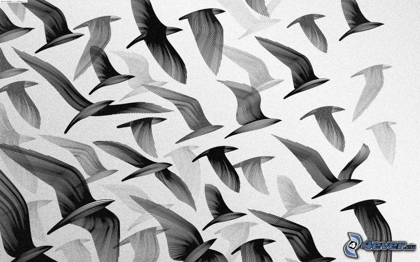kŕdeľ vtákov