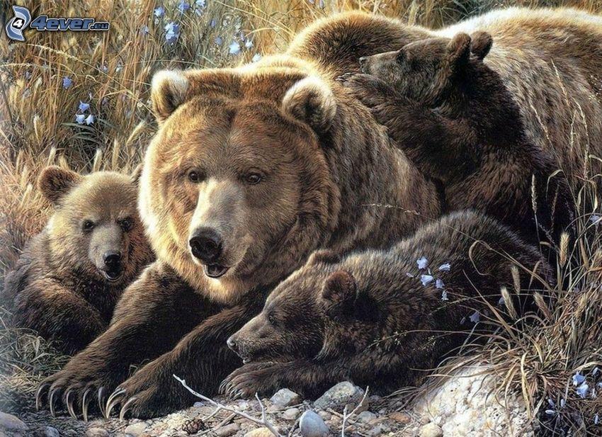 medvede, mláďatá