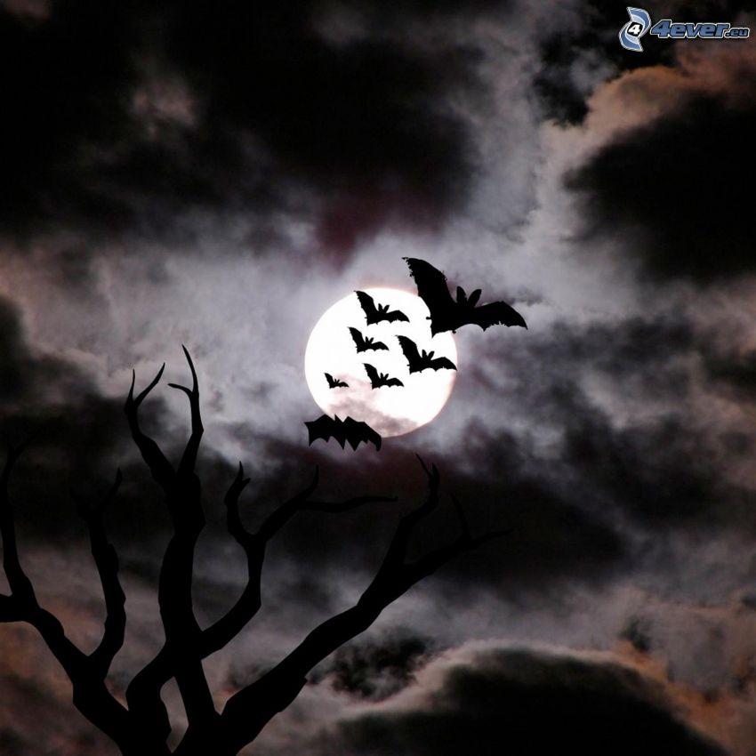 netopiere, silueta stromu, mesiac, tmavé oblaky