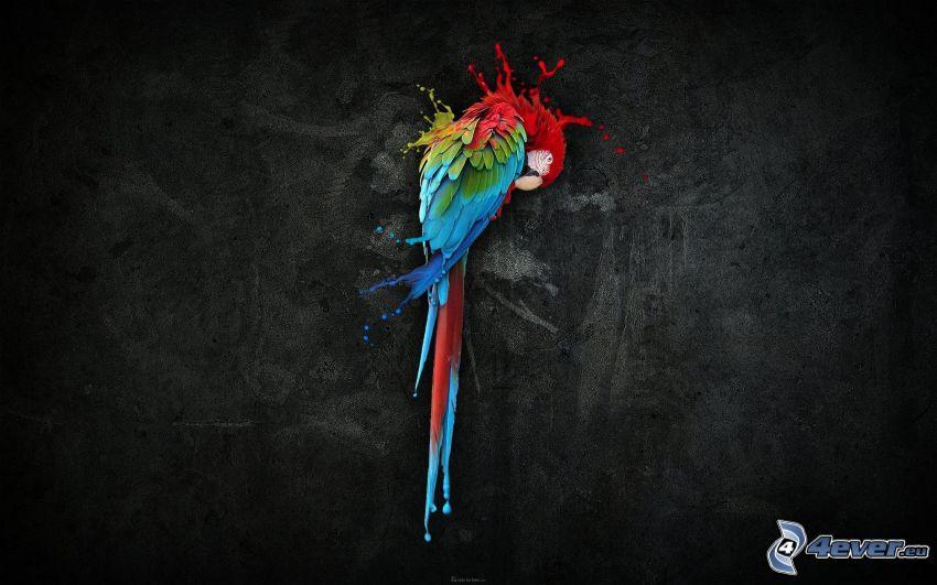 papagáj, machule, čierne pozadie