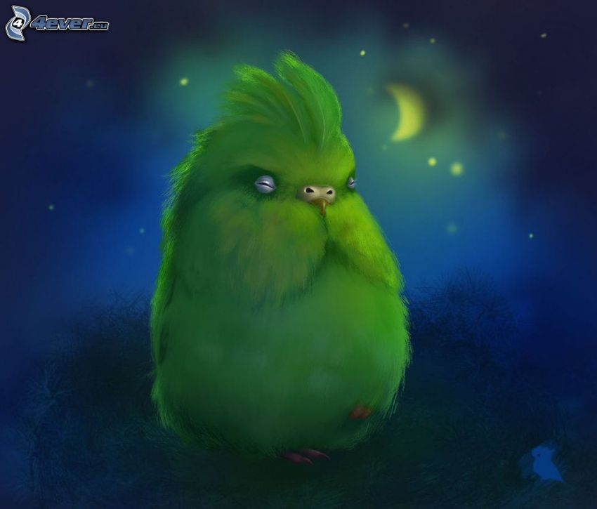 papagáj, noc, mesiac