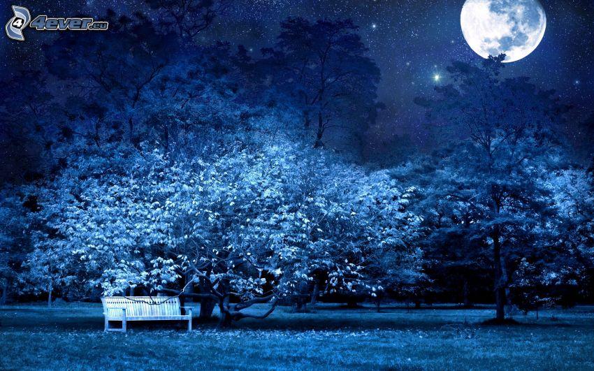 park, noc, lavička, stromy, mesiac