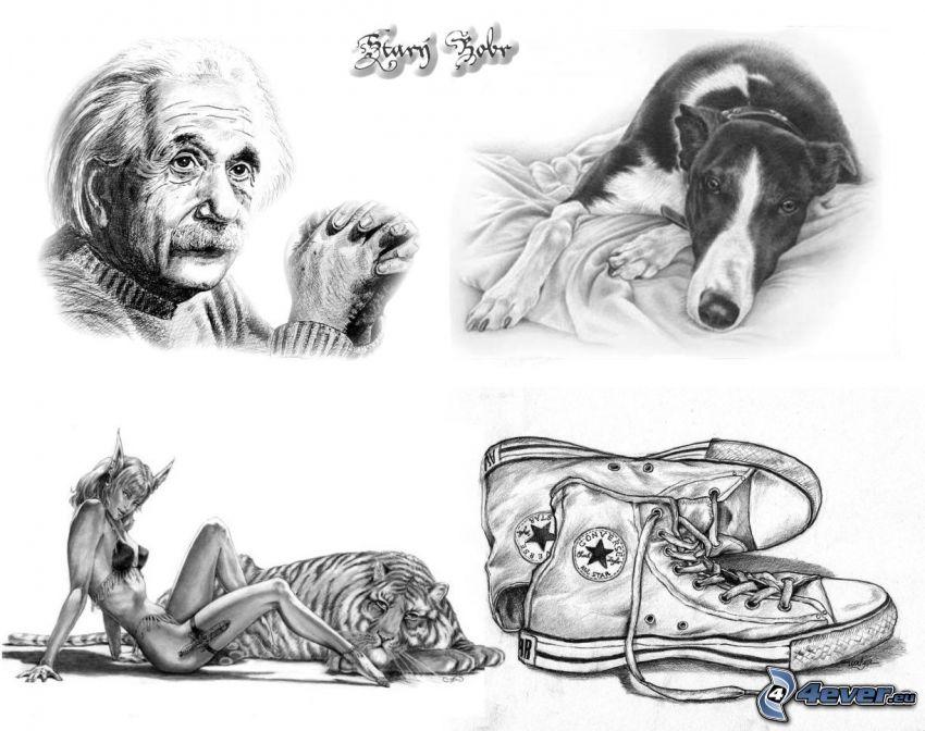Albert Einstein, Converse, pes, čertica