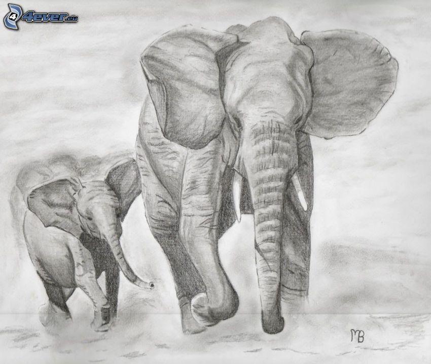 kreslené slony