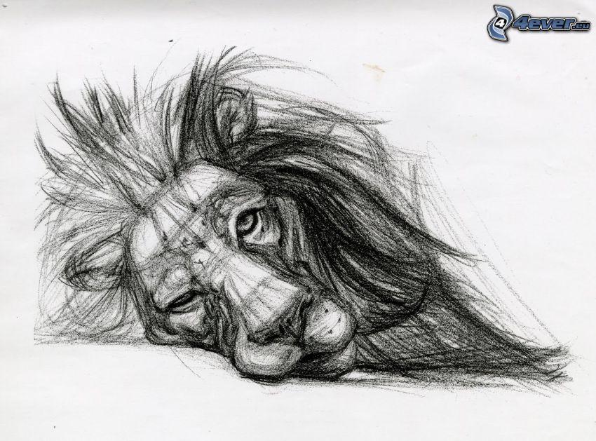lev, hriva