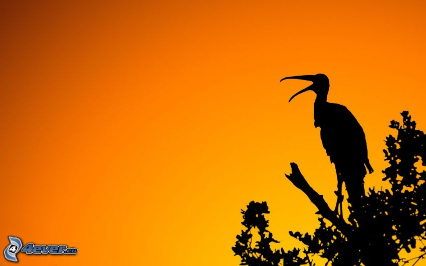 silueta bociana, oranžová obloha