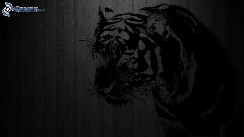 tiger, kresba, stena