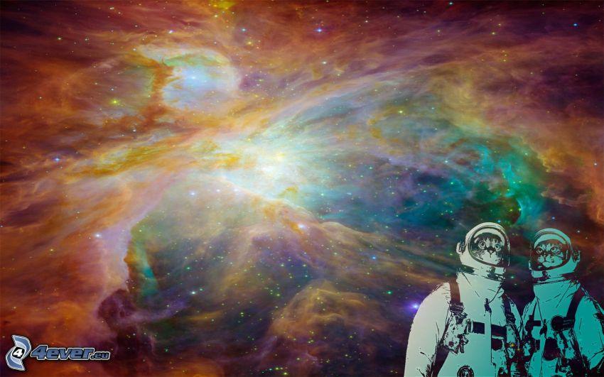 vesmír, kozmonauti, mačky