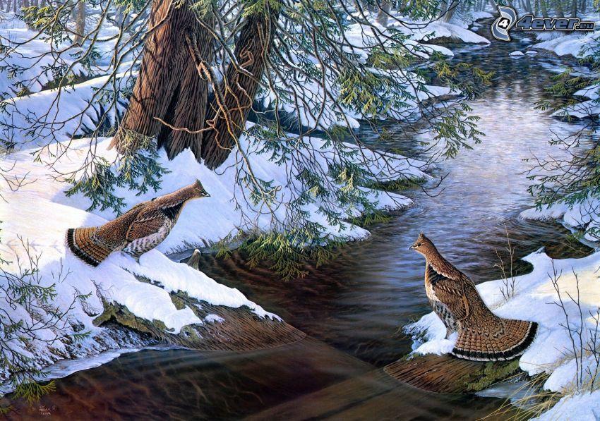 vtáky, potok, zasnežená krajina