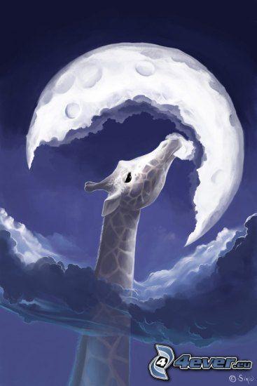 žirafa, mesiac