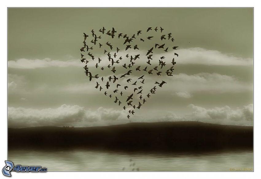 kŕdeľ vtákov, srdiečko, oblaky