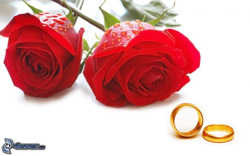 červené ruže, obrúčky