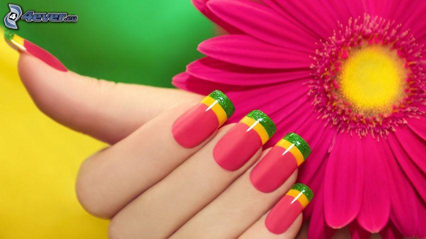 nalakované nechty, gerbera, ružový kvet