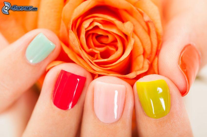 nalakované nechty, oranžová ruža, farby
