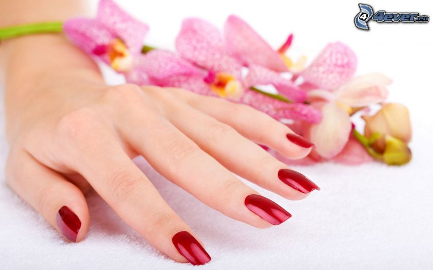 nalakované nechty, ruka, Orchidea