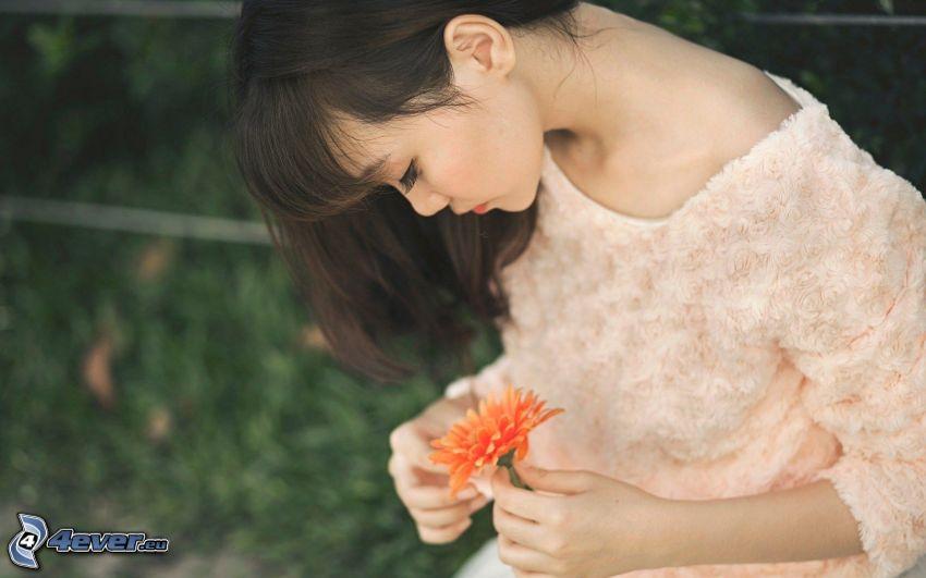 aziatka, gerbera, oranžový kvet