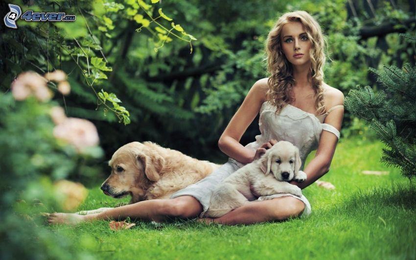 blondínka, šteniatko Labrador, Labrador