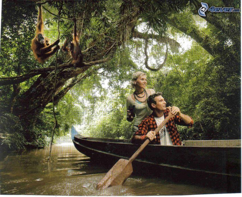 dobrodružstvo, drevený čln, prales, orangutány