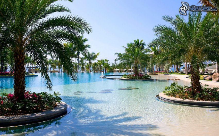 bazén, palmy
