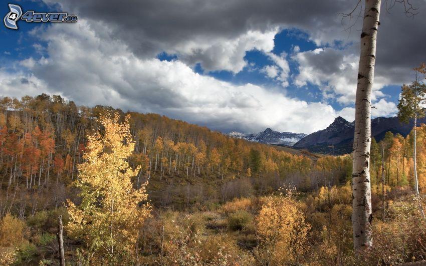 brezový les, žltý jesenný les, tmavé oblaky