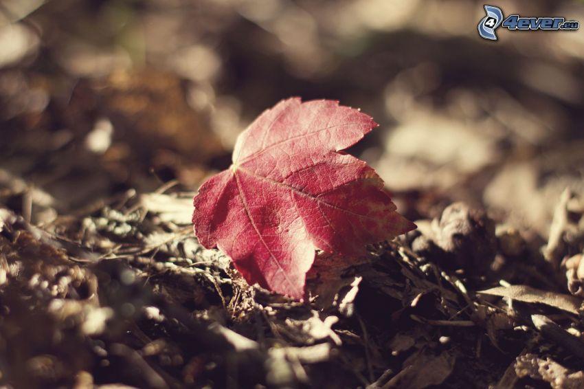 červený list, suché lístie