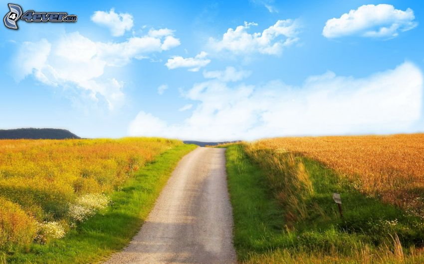 cesta, pole