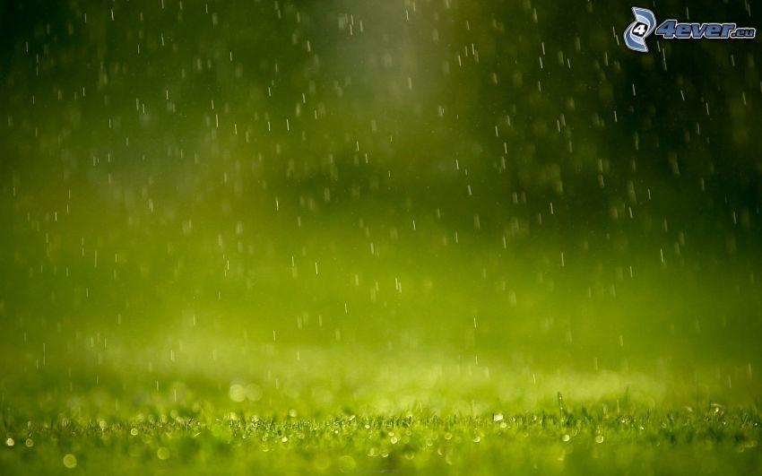 dážď, kvapky