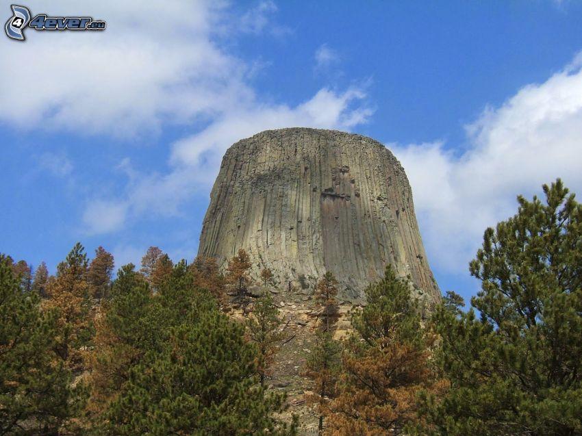 Devils Tower, skala, ihličnaté stromy