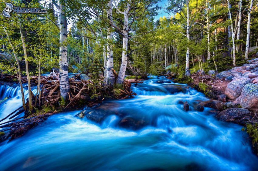divoký lesný potok, brezy, HDR