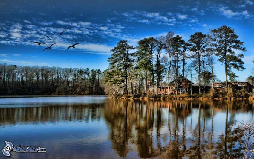 domček pri jazere, stromy, kŕdeľ vtákov