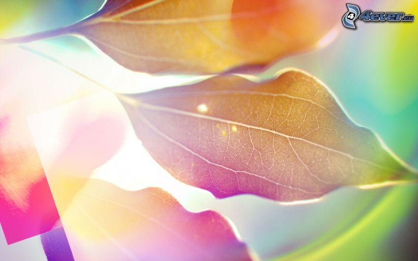 farebné listy, jesenné listy