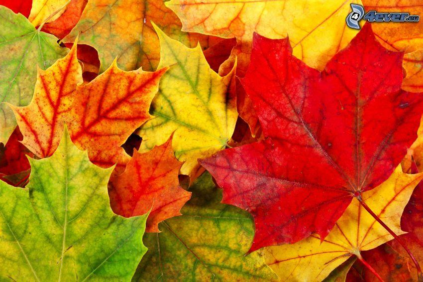 farebné listy